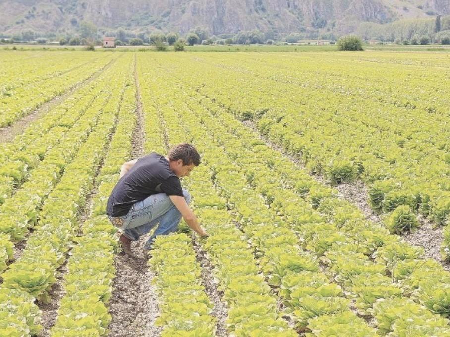 Giovani e lavoro: +7% imprese under35 nell'agroalimentare