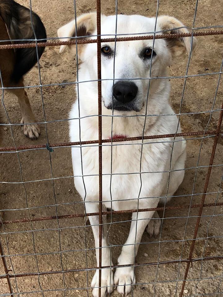 Trovatelli E Cani Di Casa Come Accudirli 5 Amici Da Adottare