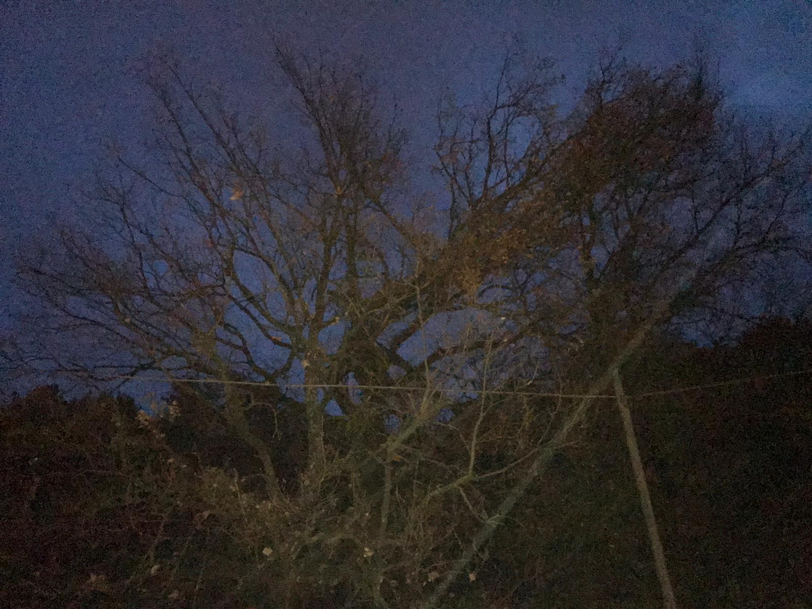 Immagini Di Piante E Alberi maltempo, ciociaria sferzata da nubifragi e vento: cadono alberi